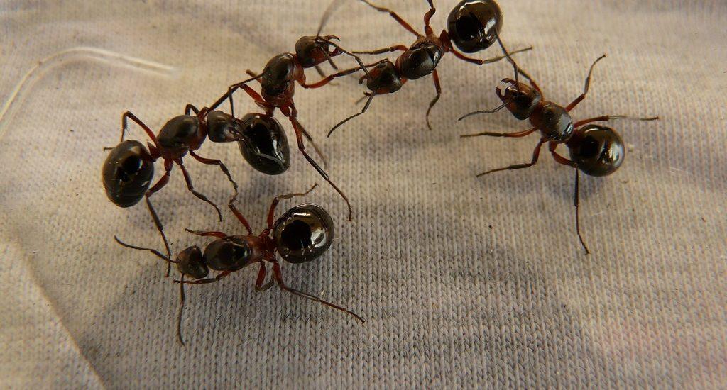 hogar libre de hormigas
