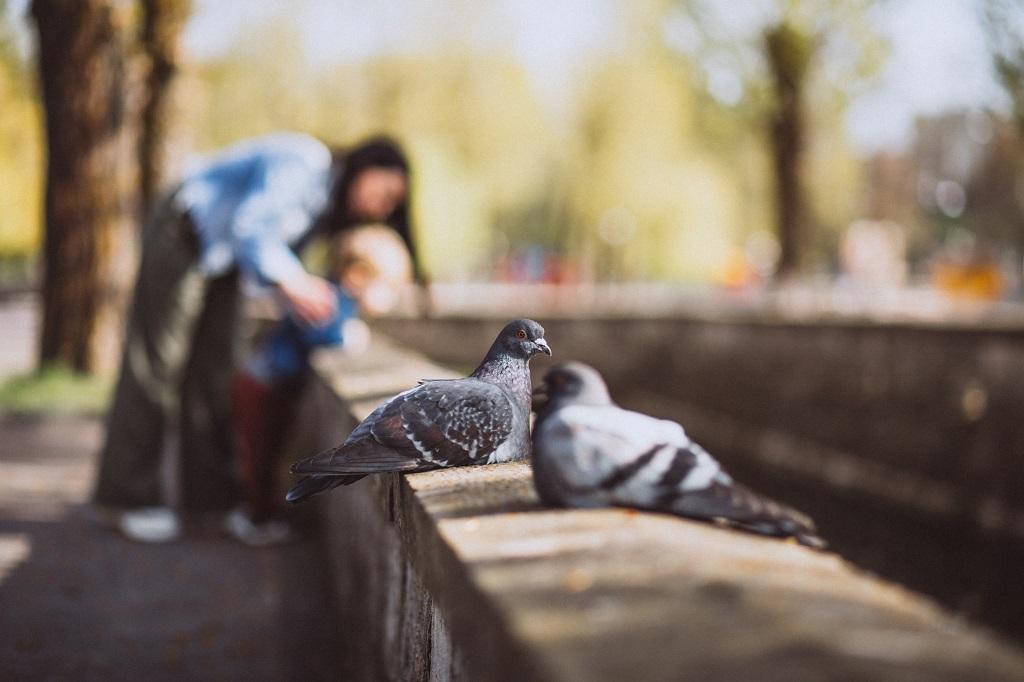 Enfermedades palomas